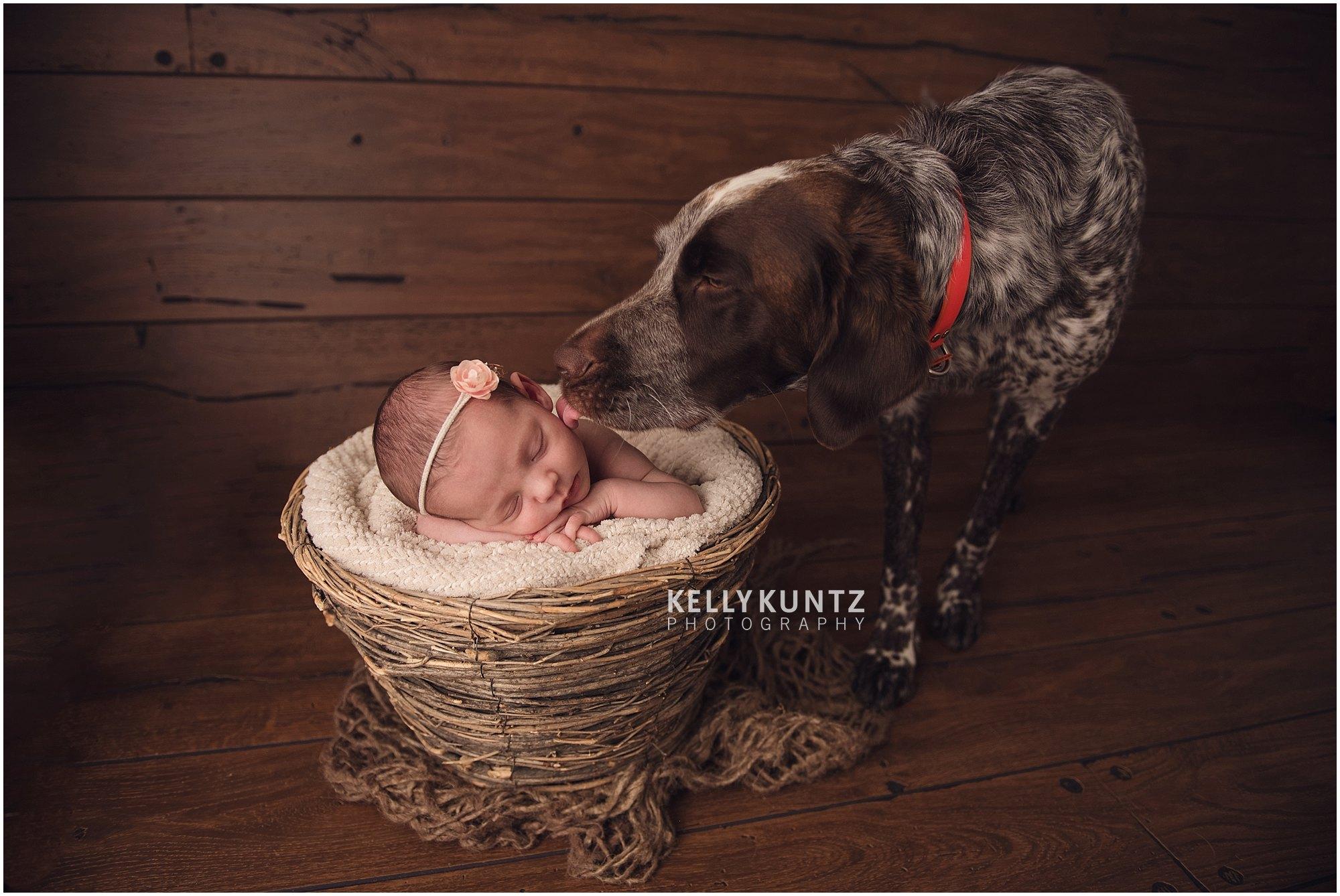Newborn dog photography